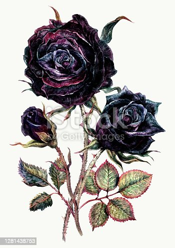 Watercolor Bouquet of Black Roses