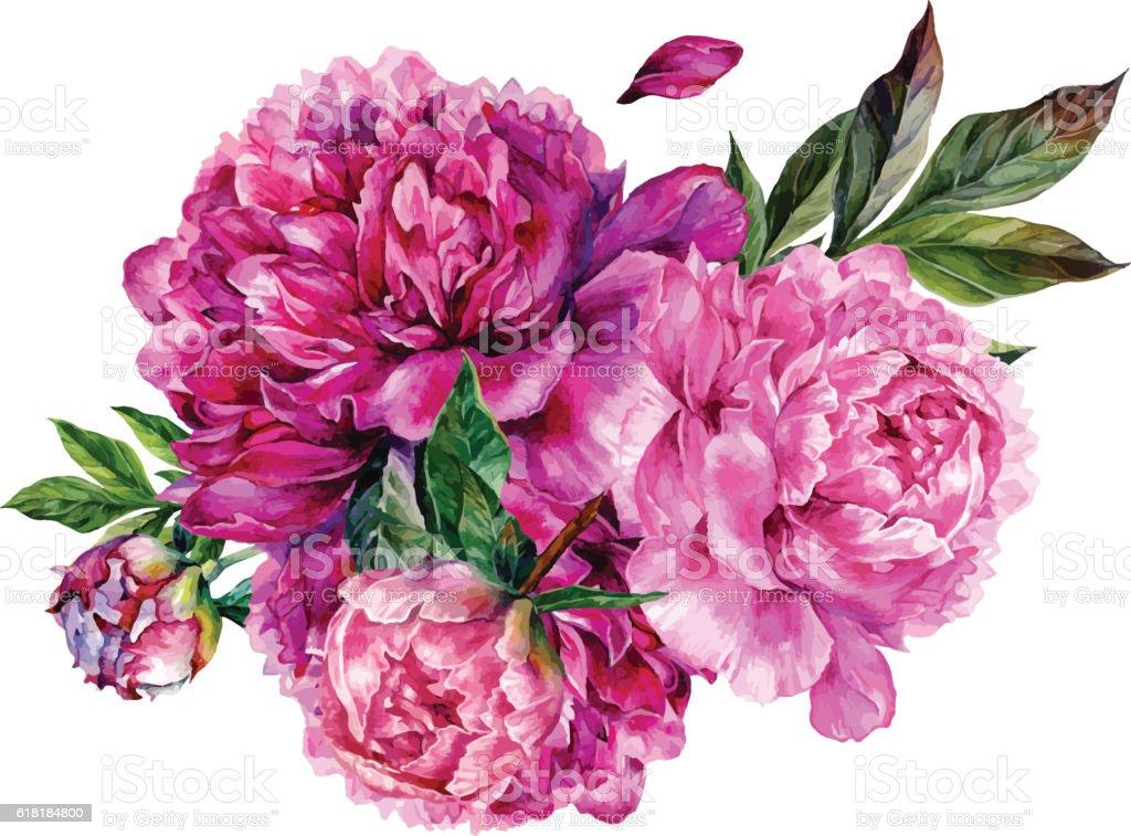 Watercolor bouquet of pink peonies.