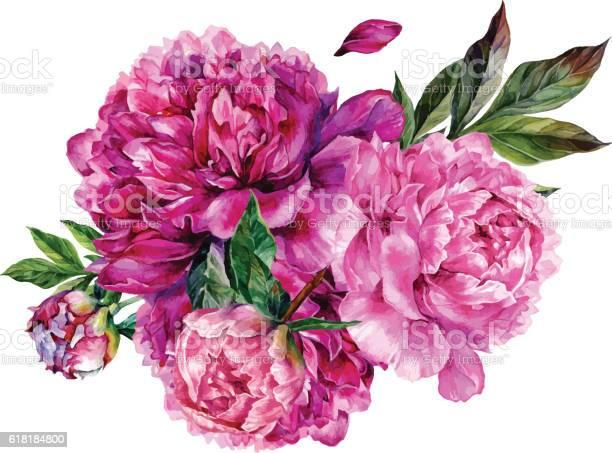 Watercolor bouquet of pink peonies vector id618184800?b=1&k=6&m=618184800&s=612x612&h=eusocgqm2cjapndgjusj wnxuhqlw sxzgtxc1voo2w=