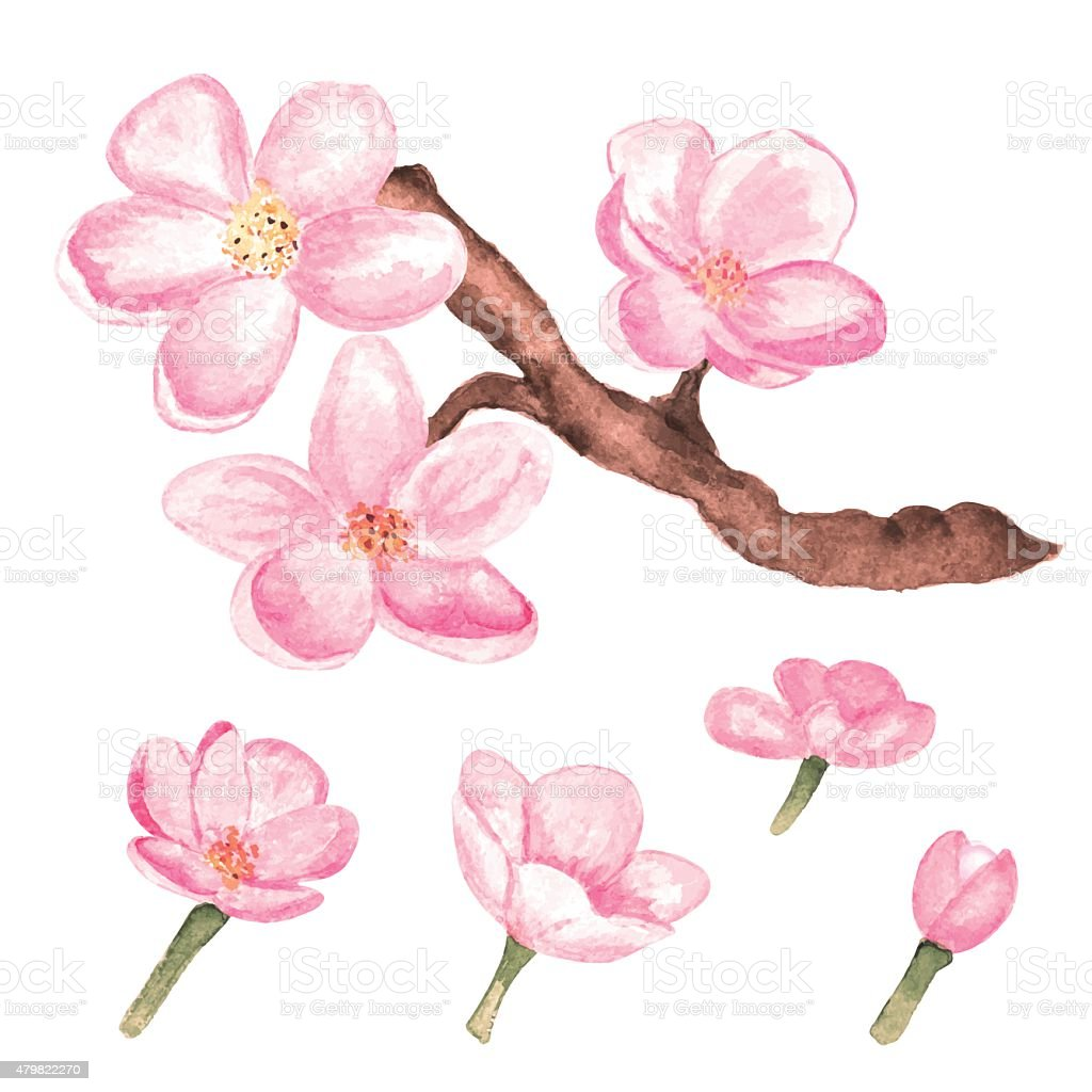 Watercolor branch blossom sakura, cherry tree and flowers vector art illustration