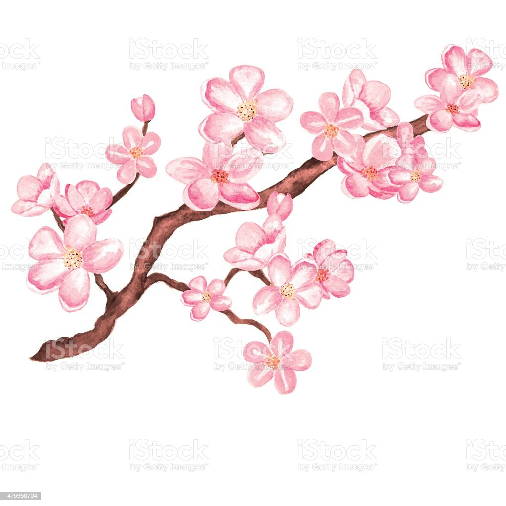 Watercolor branch blossom sakura, cherry tree with flowers vector art illustration