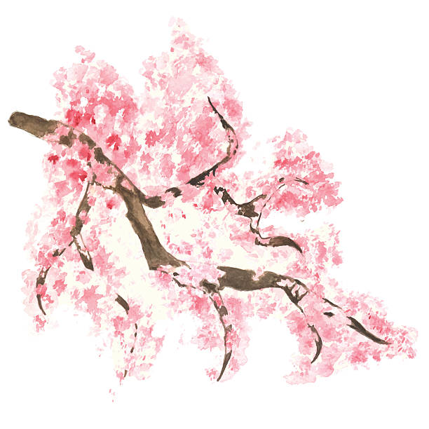 Watercolor branch blossom sakura Watercolor branch blossom sakura, pink sketch cherry tree with flowers isolated on white background. Hand painting on paper apple blossom stock illustrations