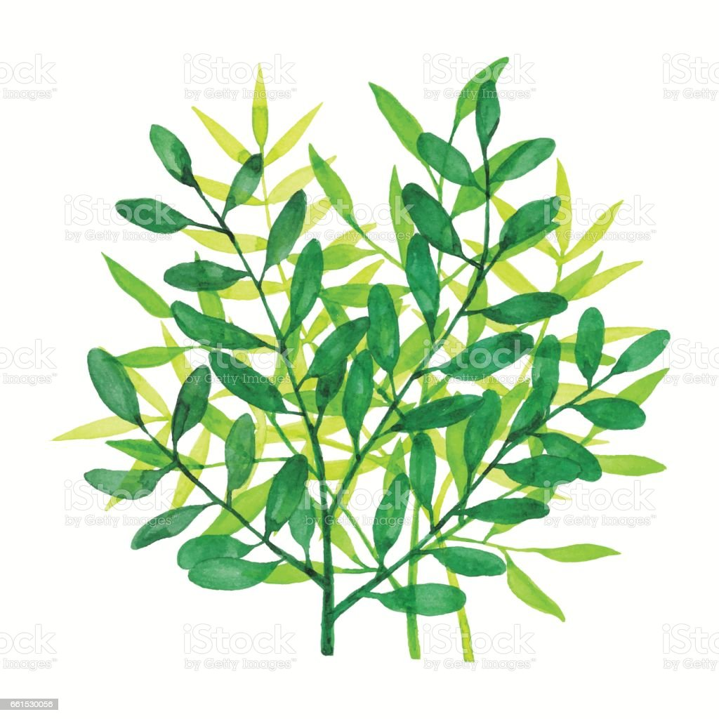 Watercolor Branchs Green vector art illustration