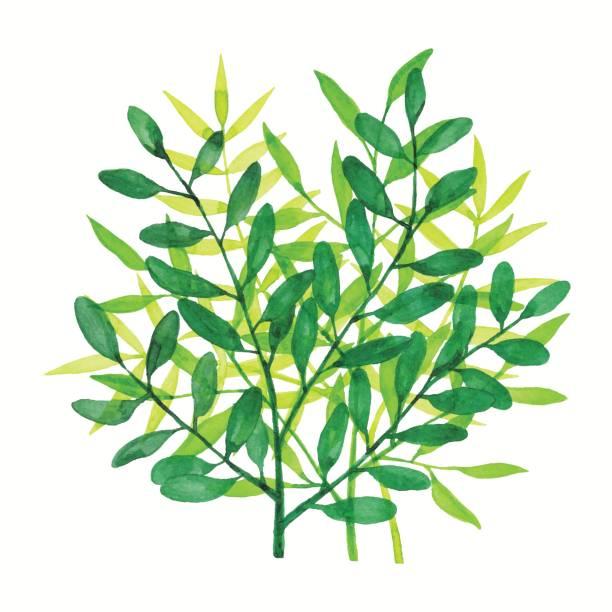 Watercolor Branchs Green vector art illustration