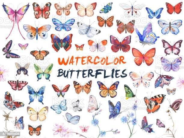 Watercolor butterflies illustration vector id871669404?b=1&k=6&m=871669404&s=612x612&h=e0avnthdbvhq1udjqixw ektlhqfl61lxpc5f6v0lqu=