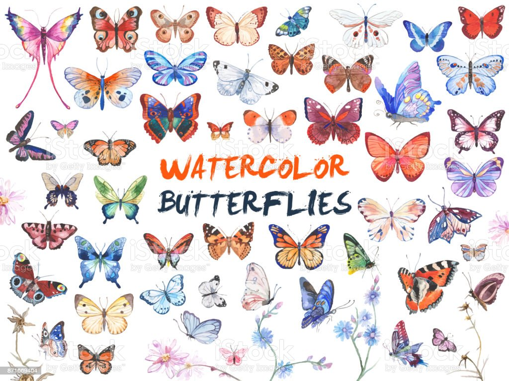 Watercolor butterflies illustration vector art illustration