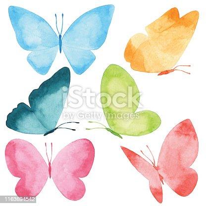 Vector illustration of Butterflies.