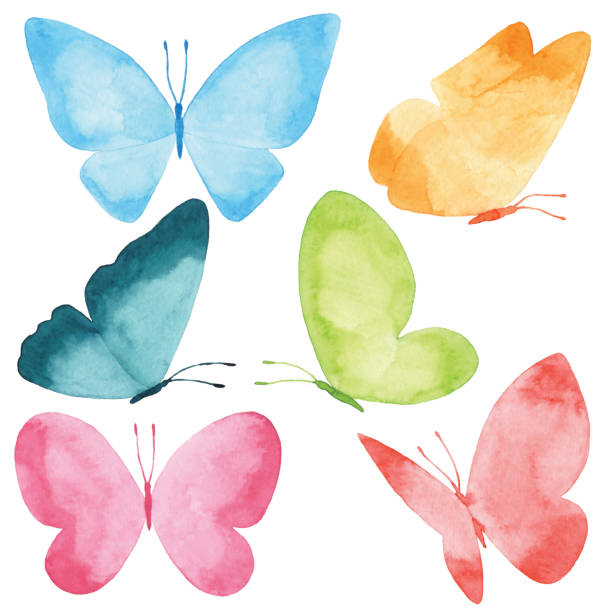 illustrations, cliparts, dessins animés et icônes de papillons à l'aquarelle - papillon