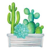 Watercolor cacti set, succulents, home flowers, houseplants in box isolated on white background
