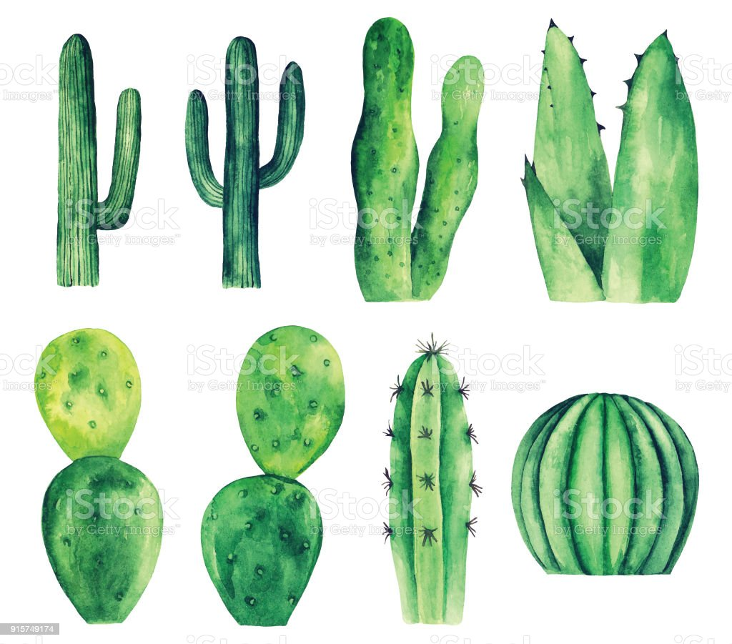 Watercolor cactus vector clip art vector art illustration