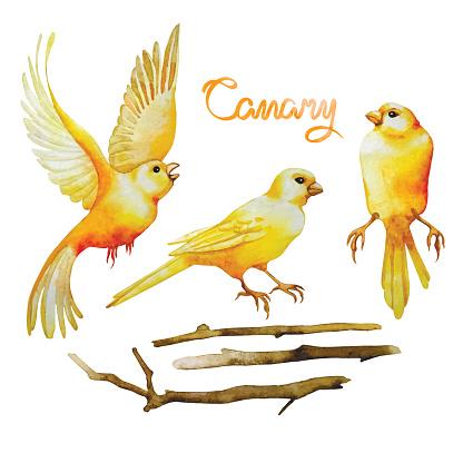 Watercolor canaries