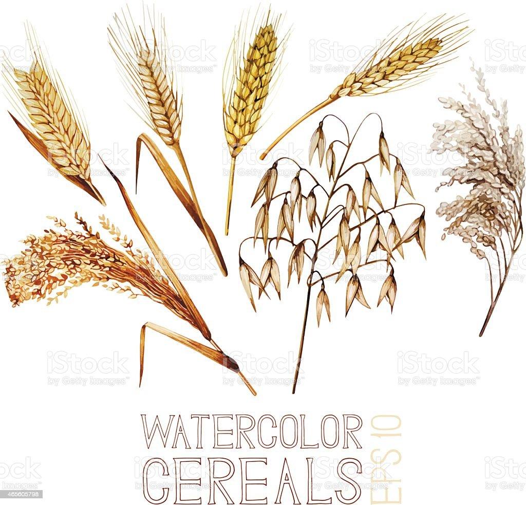 watercolor cereals vector art illustration