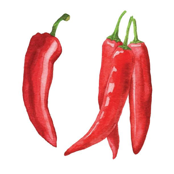 ilustrações de stock, clip art, desenhos animados e ícones de watercolor chili peppers - red bell pepper isolated