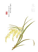 Watercolor Chinese ink paint art illustration nature plant from The Book of Songs rice. Translation for the Chinese word : Plant and rice
