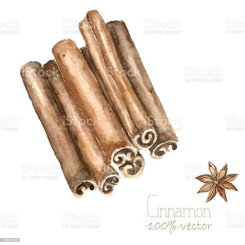 Watercolor cinnamon and anise. vector art illustration