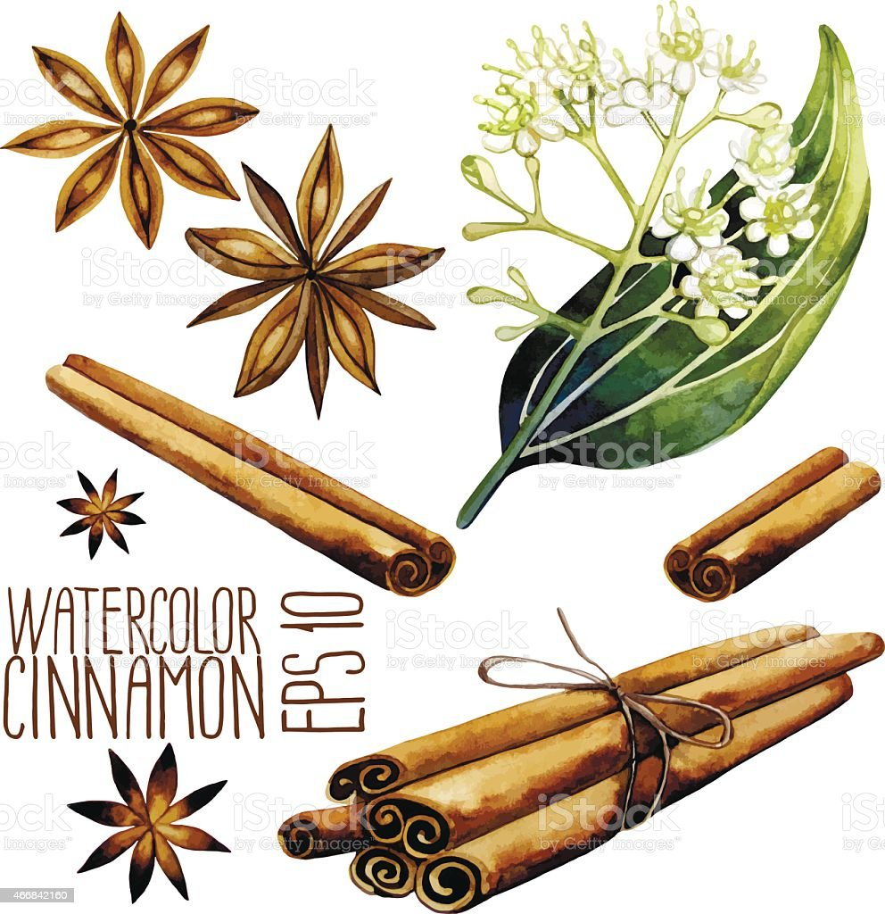 Watercolor cinnamon set vector art illustration