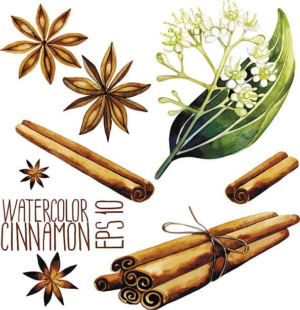 Watercolor cinnamon set vector art illustration