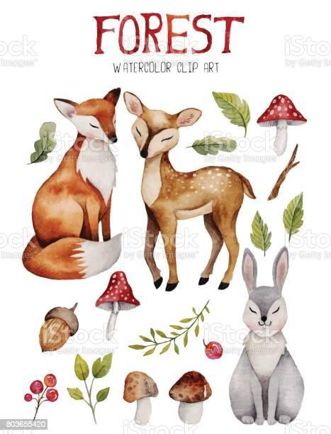 Watercolor clipart with cute forest elements vector id803655420?b=1&k=6&m=803655420&s=612x612&h=bklaz7hu8cbpf3crrpuhg7hjfv2ej ucda3dmqyryu0=