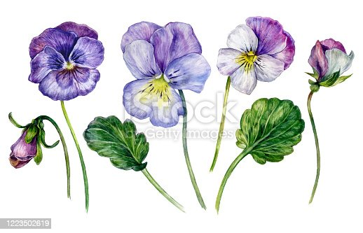 istock Watercolor Collection of Colorful Violets 1223502619