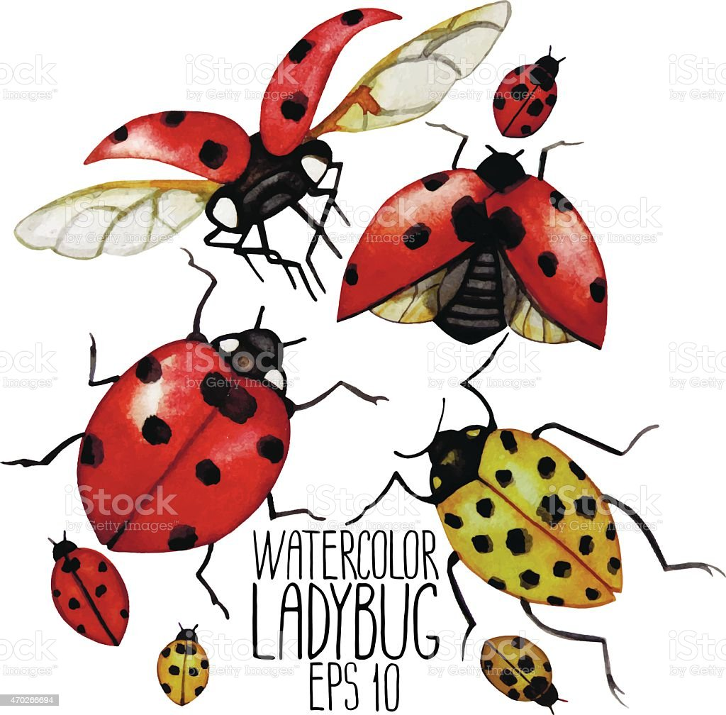 Watercolor collection of ladybugs