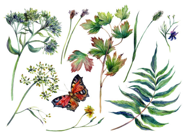 Watercolor Collection of Motley Grass vector art illustration