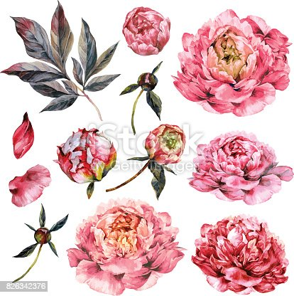 istock Watercolor Collection of Pink Peonies. 826342376