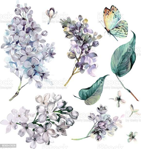 Watercolor collection of purple lilac vector id826342626?b=1&k=6&m=826342626&s=612x612&h=rfomf6oipfy7a ip8qzricclavrt0tzzen21x1zmxsy=