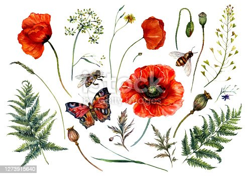 istock Watercolor Collection of Red Poppies and Meadow Plants 1273915640