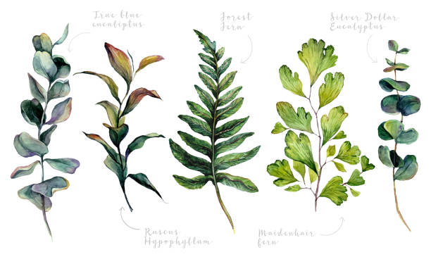 Watercolor Collection of Trendy Greenery vector art illustration