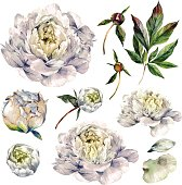Watercolor Collection of White Peonies, Buds, Petals and Foliage Isolated on White. Botanical Illustration in Vintage Style. DIY Set for Wedding Design.