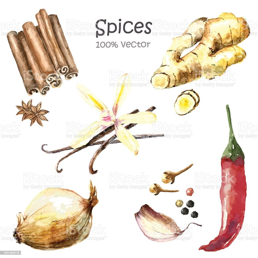 Watercolor collection spices. vector art illustration