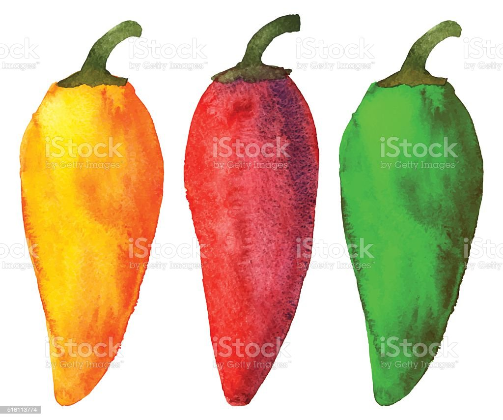 Watercolor colorful peppers vector art illustration