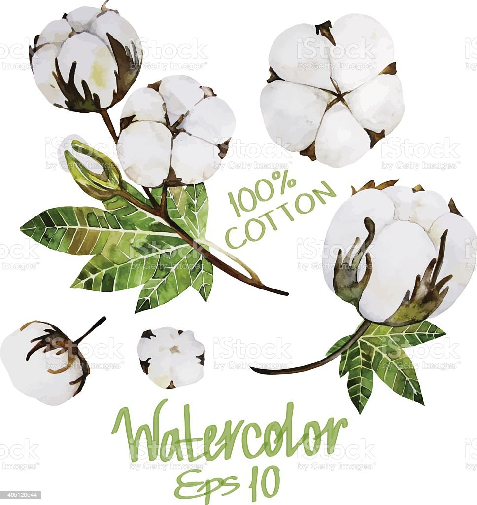 Watercolor cotton vector art illustration