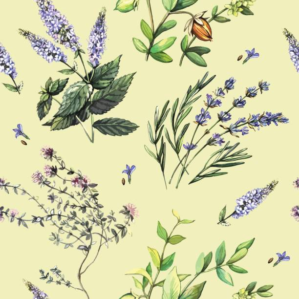 Watercolor decorative seamless with medicinal plants Watercolor decorative seamless with medicinal plants lavender plant stock illustrations