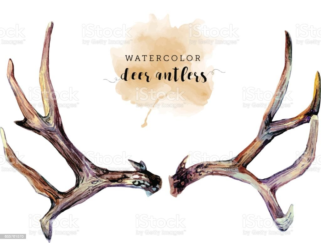 Watercolor Deer Antlers vector art illustration