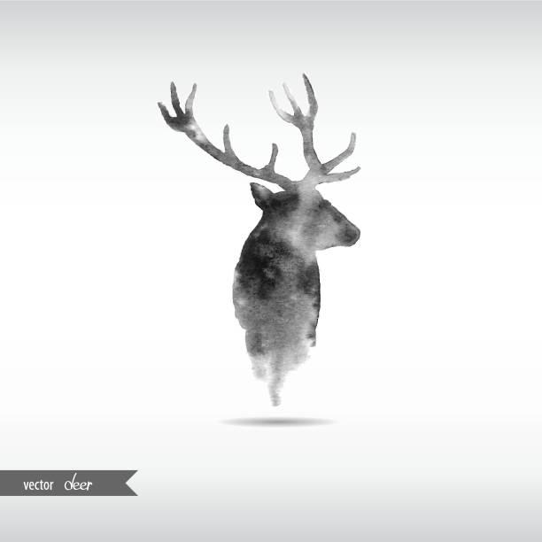 aquarell hirschkopf - vektor - hirsch stock-grafiken, -clipart, -cartoons und -symbole