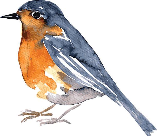 watercolor drawing bird vector art illustration