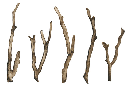 Watercolor dry tree branches