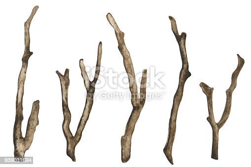 Watercolor dry tree branches set closeup isolated on white background. Hand painting on paper