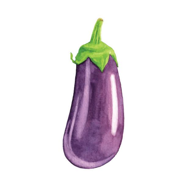 illustrazioni stock, clip art, cartoni animati e icone di tendenza di watercolor eggplant - melanzane