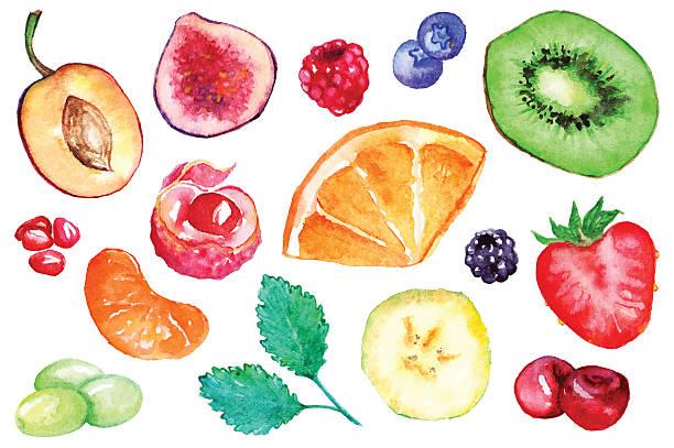 Watercolor exotic fruit berry slice set isolated vector Watercolor exotic fruit berry slice set isolated vector. berry fruit stock illustrations