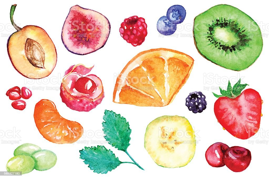 Watercolor exotic fruit berry slice set isolated vector vector art illustration