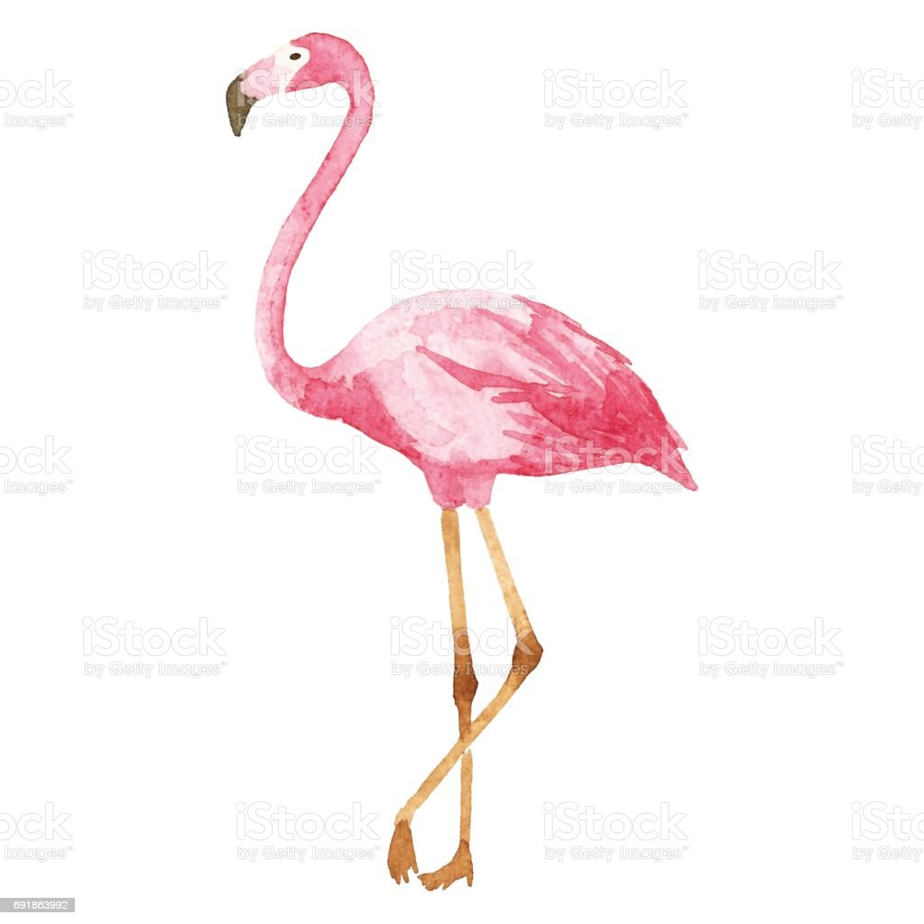 Watercolor Flamingo Stock Vector Art & More Images of Africa ...