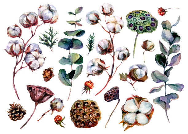 Watercolor Floral Collection of Cotton and Eucalyptus vector art illustration