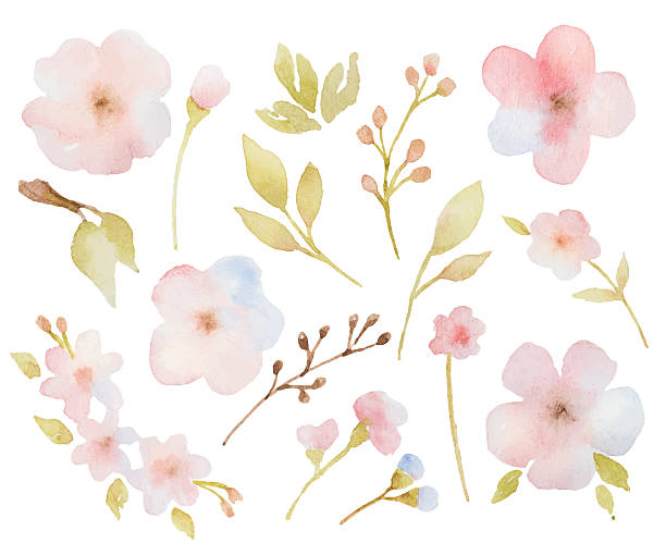 Watercolor floral set of branches of leaves and flowers. Watercolor floral set of branches of leaves and flowers. Perfect for wedding invitations, greeting cards and other design. single flower stock illustrations