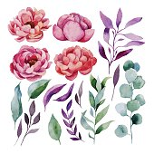 Watercolor floral set. Hand painted
