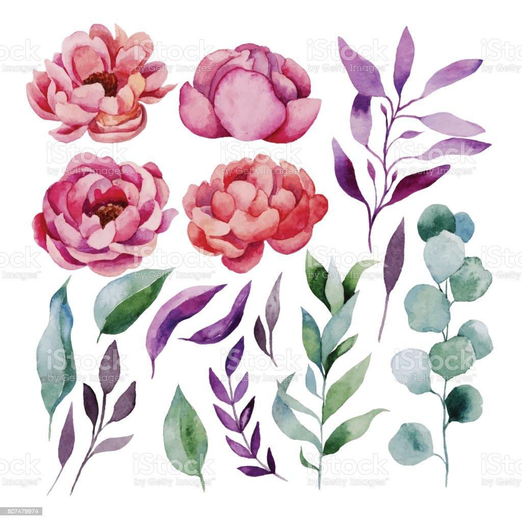 Aquarela floral definido - ilustração de arte em vetor