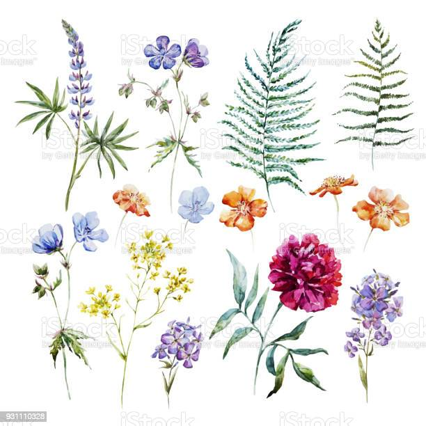 Watercolor floral vector set vector id931110328?b=1&k=6&m=931110328&s=612x612&h=cgqleah5vuyyj7f560pnex w1k7yvpdcwuzg4wviaas=