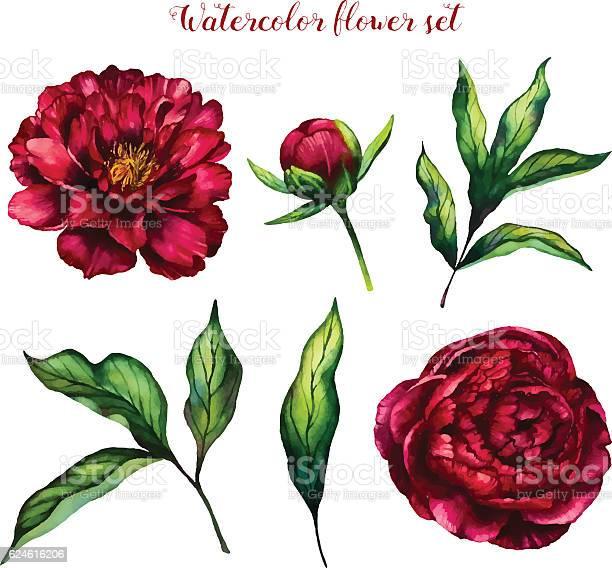 Watercolor flower set of peonies and leaves vector id624616206?b=1&k=6&m=624616206&s=612x612&h=nnfnk09xybewihttf0 2wqiiddkj4atzpqfserdj5pc=