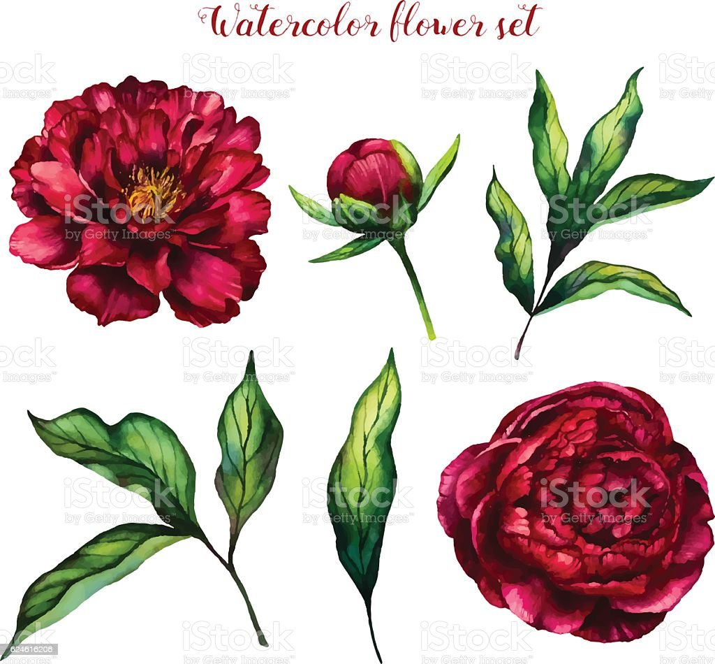 Watercolor flower set of peonies and leaves vector art illustration